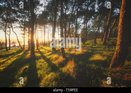 beautiful forest with sunshine at the sunset - Stock Image