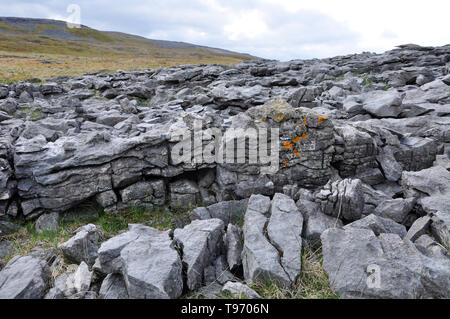 Brightly coloured lichen growing on a Carboniferous limestone outcrop on the mountain above Dan-yr-Ogof caves in the Black Mountains,South Wales,UK - Stock Image