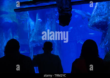 Visitors to an aquarium, seen in silhouette, gaze into a tank lit whit blue lighting. - Stock Image