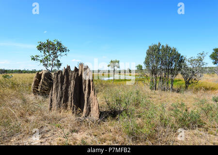 View of magnetic termite mounds in front of wetlands with water lilies, Cape York Peninsula, Far North Queensland, FNQ, QLD, Australia - Stock Image
