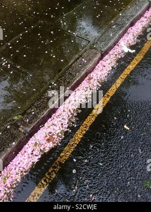 Fallen blossom in the gutter - Stock Image
