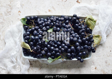 Aronia, commonly known as the chokeberry, with leaves. Freshly picked homegrown aronia berries on table. - Stock Image