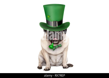 cute smiling st patricks day pug puppy dog sitting down with green top hat and pipe, isolated on white background - Stock Image