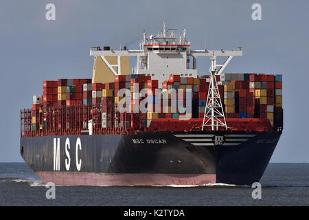 MSC Oscar - Stock Image