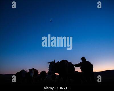 MONGOLIA MAI 18 : C'est a la tombee de la nuit et comme chaque jour, cette femme rentre son troupeau dans la - Stock Image