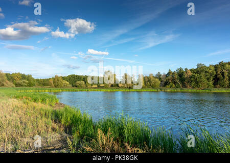 Small lake with reed in the sunny summer country. Landscape in the calm nature. - Stock Image