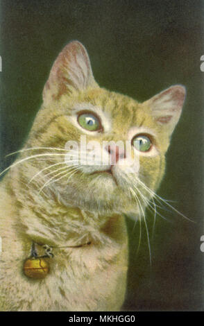 Portrait of Cat with Bell - Stock Image