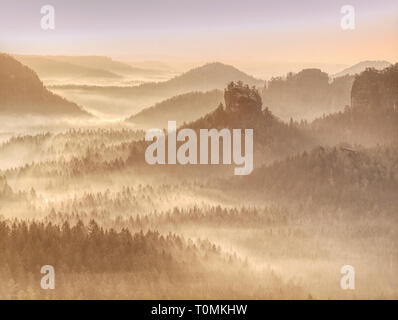 Trees in fog and sun on an early autumn morning.  Strong rays of the sun breaking through the fog in forest hill - Stock Image