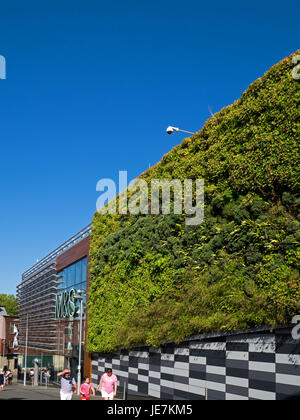 The Living Wall, a vertical garden, part of Marks and Spencer store extension in The City of Norwich, Norfolk, England, - Stock Image