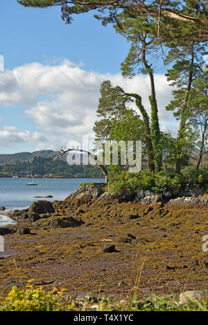 The Bamboo Park Shore View at Glengarriff, West Cork - Stock Image