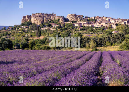 View of village of Saignon with field of lavander in bloom, Provence, France - Stock Image
