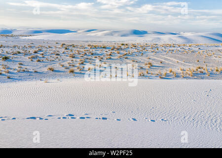 White sands dunes national monument hills of gypsum sand and plants in New Mexico with horizon at sunset - Stock Image