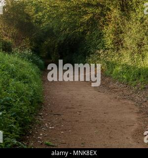 A pathway through the woods, leading into the gloom - Stock Image