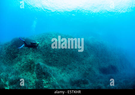a young female diver near the surface and posing underwater while swimming over a limestome reef against a light - Stock Image