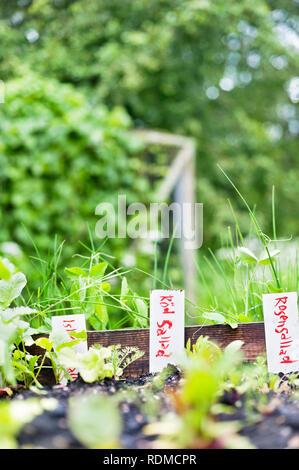 Labels in garden - Stock Image