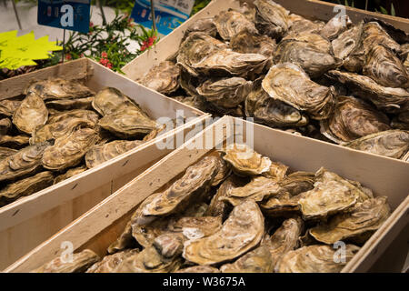 fresh Oysters in baskets on the fish market (Saint-Malo, France) - Stock Image