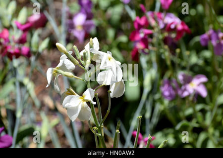 multicolored flowers in a garden - Stock Image