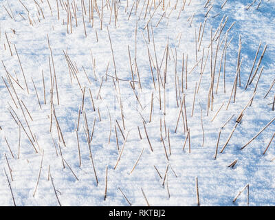 An abstract pattern image of grasses poking out of the snow. - Stock Image