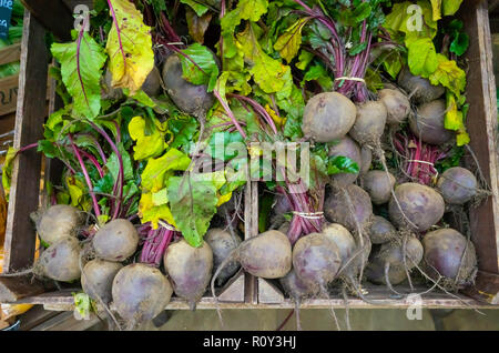 Fresh bunched Beetroot for sale on a Yorkshire Greengrocers Market Stall - Stock Image
