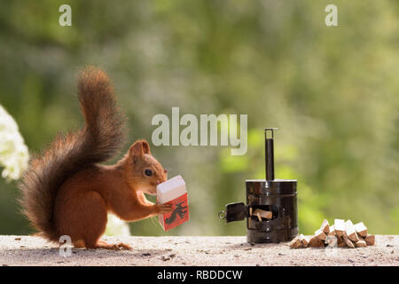 BIZARRE images seem to have captured wild red squirrels using a tiny saw to cut up sticks for their wood-burning stove. The surreal pictures show the squirrels hard at work cutting the stick into tiny logs before wheeling them from their pile over to the stove. Other weird photographs show the industrious squirrels using a miniature axe to chop the wood into smaller pieces. The humorous snaps were taken in Bispgården, Sweden by local artist and photographer Geert Weggen (48), using tiny props and placing food just out of shot to attract the squirrels. Geert Weggen / mediadrumworld.com - Stock Image