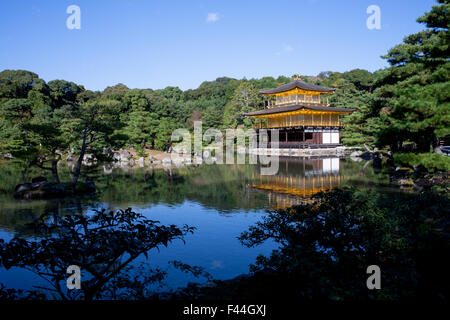 Golden Shinto shrine Kinkakuji with water reflection and surrounded by green nature - Stock Image