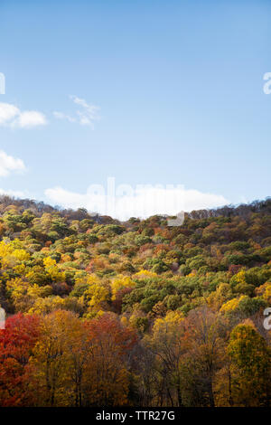Idyllic view of autumn trees against blue sky - Stock Image