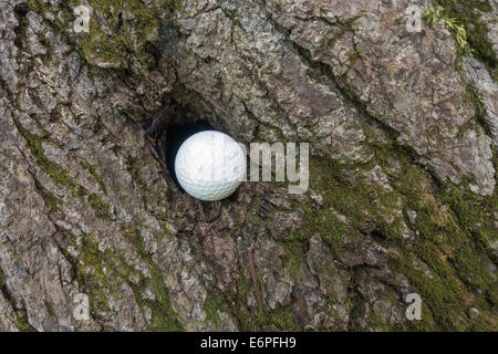 golf ball wedged in hole of tree bark - Stock Image