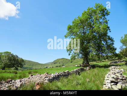 Sheep on a hillside of a Lake District hill farming in the English countryside, UK. - Stock Image