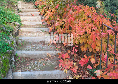 garden stone steps and autumnal leaves - Stock Image