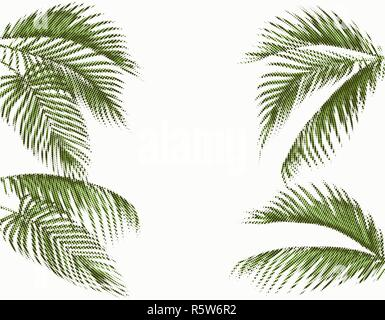 Different in shape tropical dark green palm leaves. Stylized dots design. Isolated on white background. illustration - Stock Image