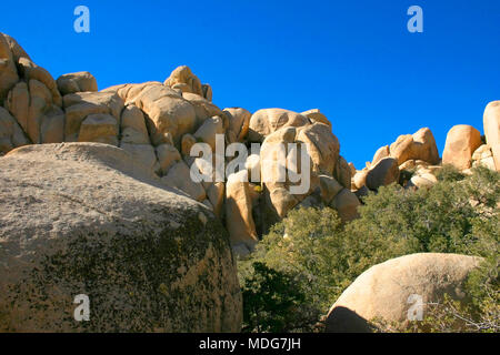 Joshua Tree National Park, Mojave Desert, California - Stock Image