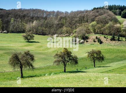 Eifel valley near Daun, Niederstadtfeld, Eifel region, Germany - Stock Image