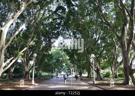 Hyde Park, Sydney - Stock Image