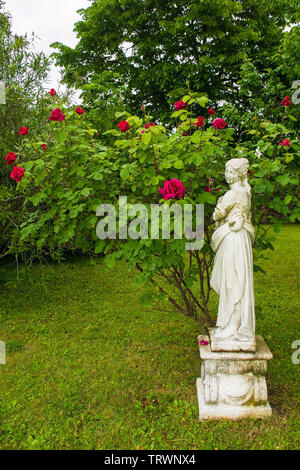 Moruzzo, Italy - May 19th 2019. A statue next to a deep pink rose bush in a formal garden in Friuli Venezia Giulia, north east Italy - Stock Image