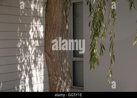 Tree in front of a modern house - Stock Image
