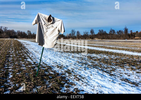 fallow cornfield in winter with scarecrow - Stock Image