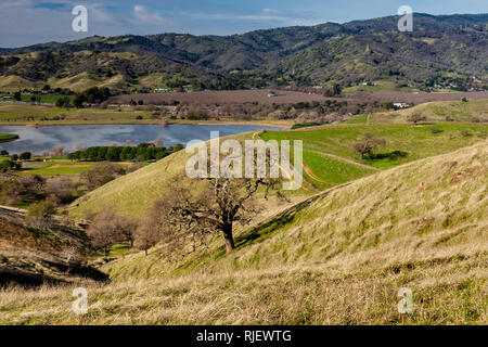 Panoramic view of the Lagoon Valley Park in Vacaville, California, USA, featuring the chaparral in the winter with green grass, and a lake - Stock Image