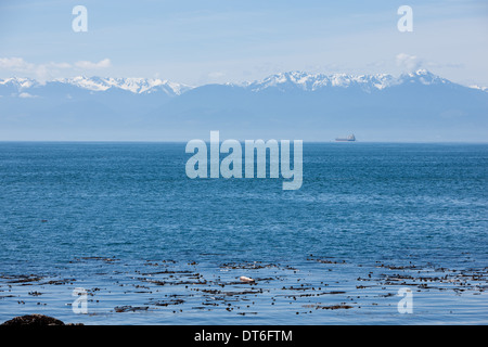 View of the snow capped mountains in the Olympia National Park, Washington State from Victoria, BC, Canada - Stock Image