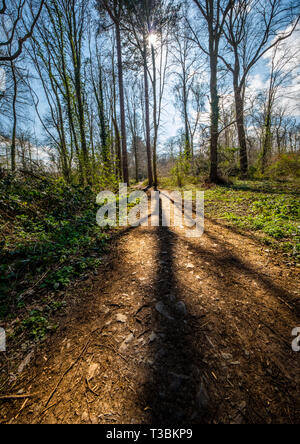 The low sun in early spring casts long shadows in Swithland Wood. - Stock Image