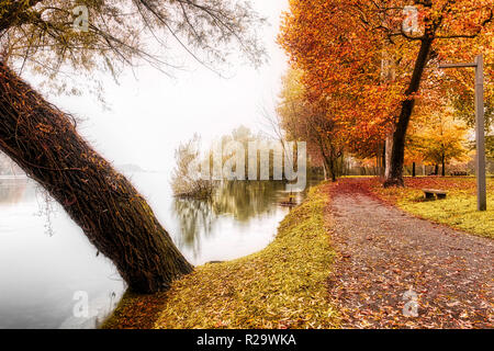 River Ticino in a foggy landscape with colored trees on the right in autumn season, Sesto Calende - Varese - Stock Image
