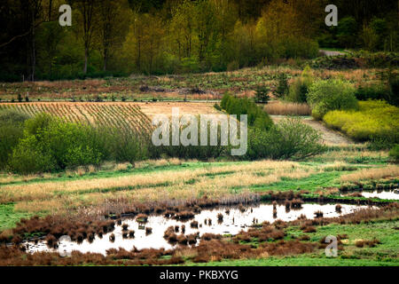 Landscape in a swamp area with water and fields in front of a forest - Stock Image