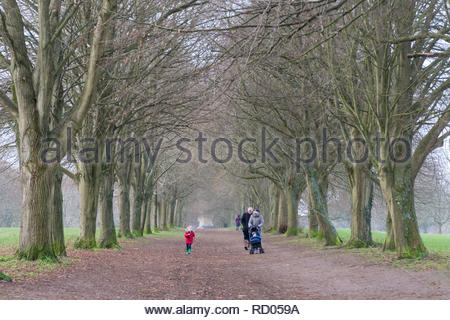 People going for a winter walk under an avenue of trees in Farnham Park, Surrey, UK - Stock Image
