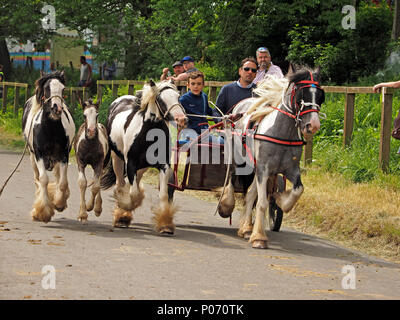 Romany horses galloping fast alongside horse drawn trap on the hill Appleby-in Westmorland at the annual Appleby Horsefair, Cumbria, England,  UK, 8 June, 2018. high speed horses & trap Credit: Steve Holroyd/Alamy Live News - Stock Image