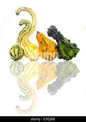 Unusual shaped Gourds - Stock Image