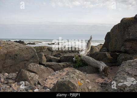 View out to sea from the beach at Forvie Sands Nature Reserve, Newburgh, Aberdeenshire, Scotland, UK. - Stock Image