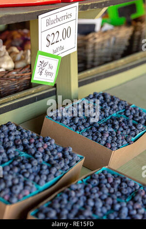 Blueberries for sale at farmers market - Stock Image
