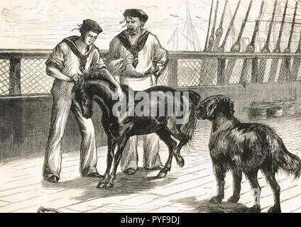 On board HMS Seraphis, Pony and Thibet Mastiff, circa 1875 - Stock Image