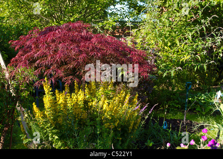 Overgrown English Garden packed with flowers, shrubs and trees. - Stock Image