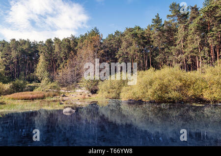 Forest lake rural scenic landscape in summer day - Stock Image