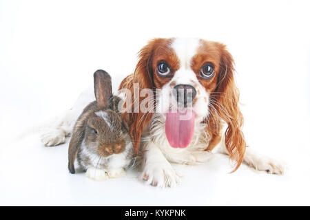 Funny animal dog photo. Funniest animals pets dogs. Rabbit bunny lop and puppy together. Animal friends, real friendship. - Stock Image